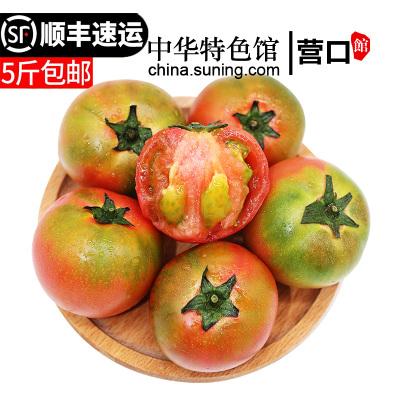 【中華特色】營口館 堿地柿子2.5kg鐵皮柿子西紅柿5斤 東北