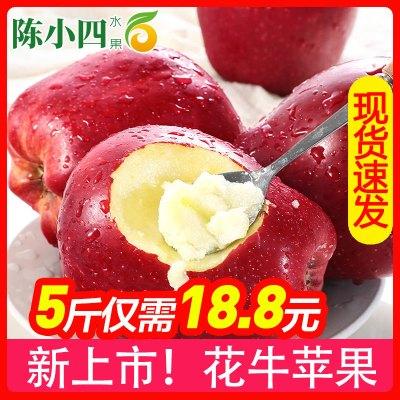 【上新】甘肅天水花牛蘋果 5斤70-75mm 中果 紅蘋果 新鮮水果 生鮮水果 陳小四水果