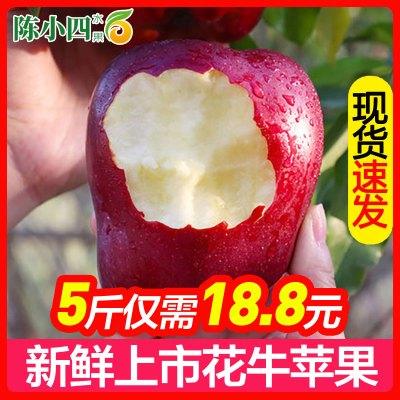 陳小四水果 甘肅天水花牛蘋果 5斤  中果 紅蘋果 新鮮水果 生鮮水果 其他