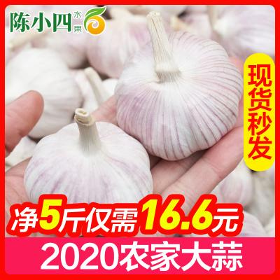 大蒜5斤 大蒜頭 生鮮蔬菜 調味品 陳小四水果