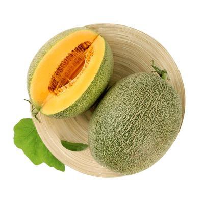 【春节照常发】西周蜜甜瓜4-5个 约15斤 哈密瓜 网纹瓜 新鲜水果