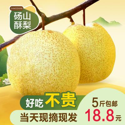 (買3斤送2斤)安徽碭山酥梨香梨凈重5斤梨子新鮮當季果園直采碭山脆梨水果送禮公司福利采購