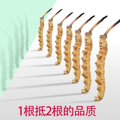 青源堂 冬蟲夏草 精選品質 青海玉樹高海拔蟲草 4條/g