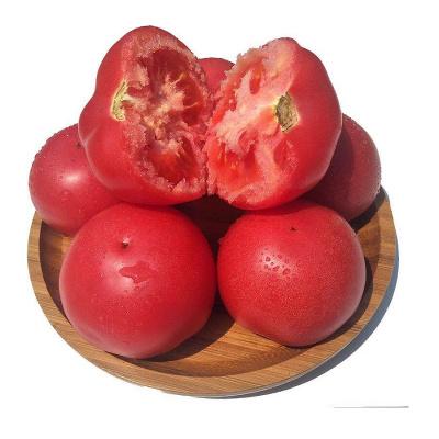 農家自種沙瓤西紅柿新鮮蔬菜番茄現摘現發5斤裝帶箱凈重4.4-5斤