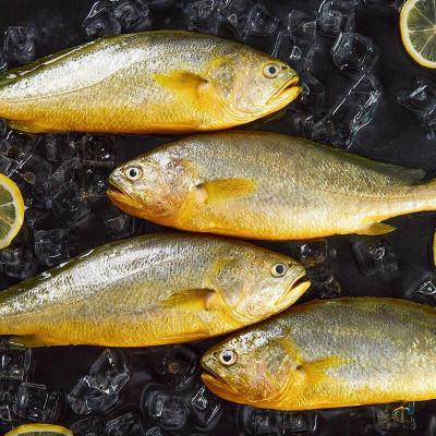 【拍4買4條69元】【現捕現發】三都港無公害黃花魚 寧德大黃魚海鮮新鮮水產6兩/條