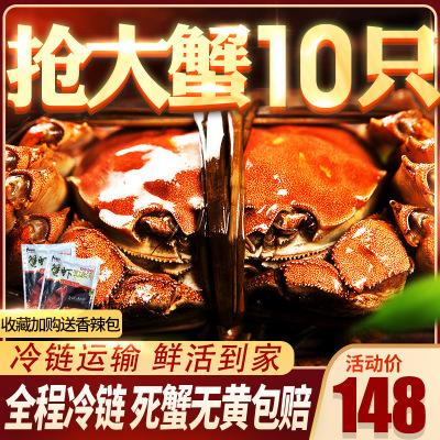 臻佳肴大閘蟹 六月黃大閘蟹 鮮活螃蟹10只2.0-2.5兩大蟹禮盒裝