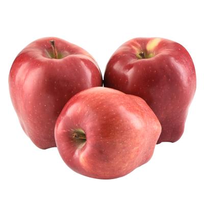 【第二件半價2件合發凈重9斤共20-22枚】甘肅花牛蘋果 蛇果 凈重5斤裝(10-12枚) 75-80# 新鮮水果