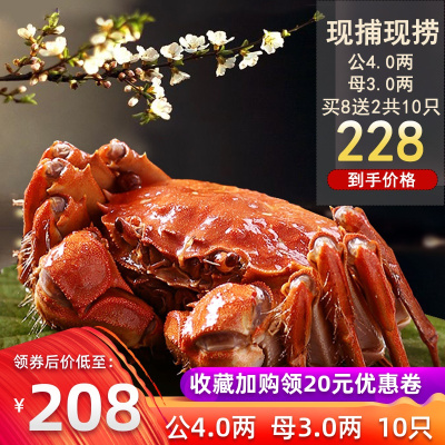 螃蟹鲜活大闸蟹全公母蟹超大4两3两餐中王中秋豪华礼袋装10只