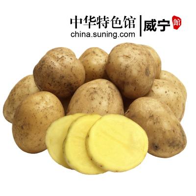 【中华特色】威宁馆 威宁土豆黄心洋芋马铃薯迷你小土豆洋芋5斤装新鲜绿色地标