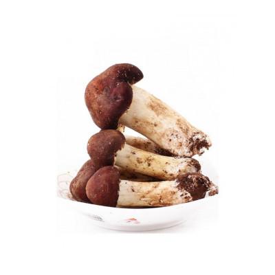 博多客 云南特产新鲜姬松茸新鲜菌巴西蘑菇食用蘑菇非姬松茸干货生鲜新鲜 500g