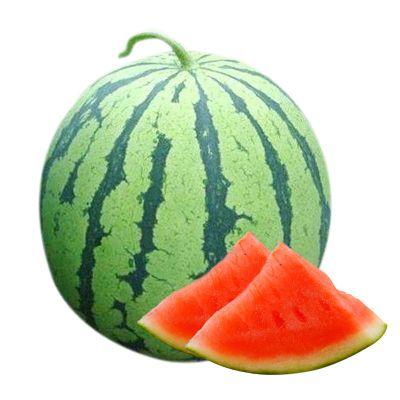 超甜8424新鮮皮薄冰糖麒麟西瓜河南夏邑現摘農家當季孕婦水果 5-6斤(精選)