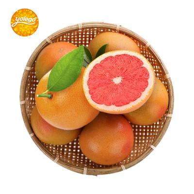 悠樂果 南非紅心西柚8個裝 單果240g-300g 冷藏進口柚子水果