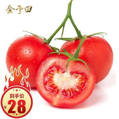 攀枝花西紅柿蕃茄普羅旺斯西紅柿山新鮮蔬菜中露天種植的沙瓤個個沙綿鮮甜汁水多到爆小果