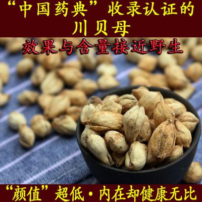 川贝母无硫川贝中国药典认证含量效果媲美野生可磨川贝粉30克