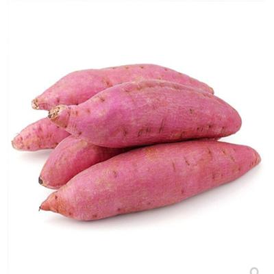 沙地黄心蜜薯烤薯非紫薯5斤