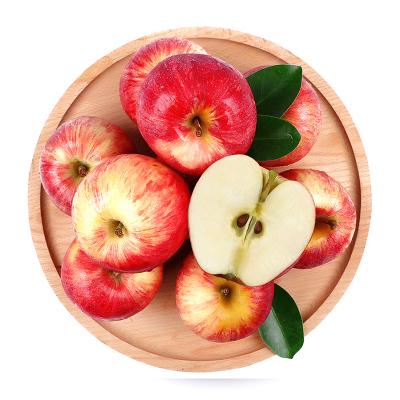 新西蘭嘎啦小蘋果12個(單果120-140g) 蘋果 新鮮水果