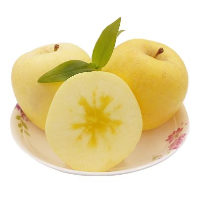 烟台奶油富士苹果2.5斤 烟台栖霞红富士苹果水果新鲜 黄金富士奶油苹果 新鲜水果生鲜
