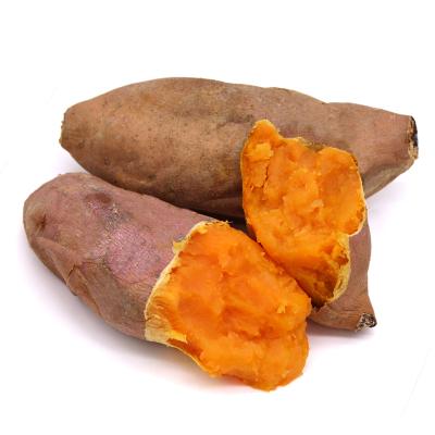 【現挖現發】鼓員香 5斤裝新鮮紅薯龍薯九號沙地蜜薯番薯蔬菜壞果包賠5斤裝