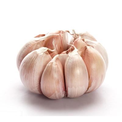 大蒜 2斤 大蒜頭 生鮮蔬菜 調味品 陳小四水果