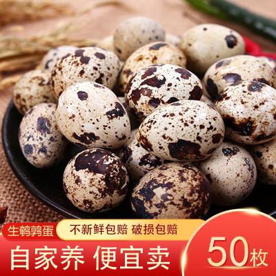 新鮮生鵪鶉蛋50枚 正宗農家散養 寶寶輔食孕婦營養 非雞蛋鵝蛋鴿子蛋鴨蛋 桃小淘