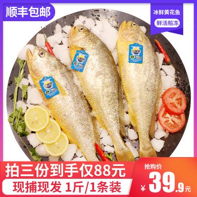 【现捕现发】三都港无公害黄花鱼 宁德大黄鱼海鲜新鲜水产1斤装