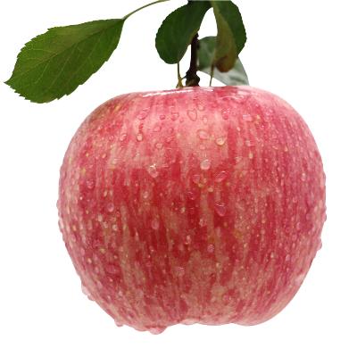 山东烟台蓬莱栖霞正宗红富士苹果不打蜡不催熟80-85mm精选送礼果
