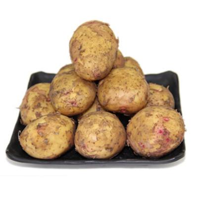 云南新鮮紅皮黃心土豆 迷你小土豆 凈重4.5KG(9斤) 高山農家自種 新鮮蔬菜