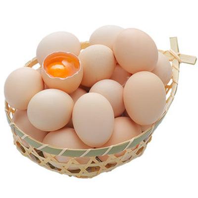 農家山上散養雞蛋40枚 新鮮自養柴雞蛋笨雞蛋草雞蛋 勇利全