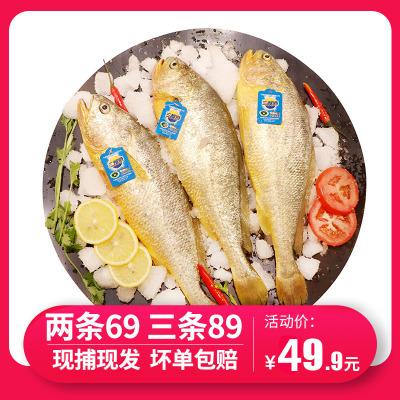 【現捕現發】三都港無公害黃花魚 寧德大黃魚海鮮新鮮水產1斤裝