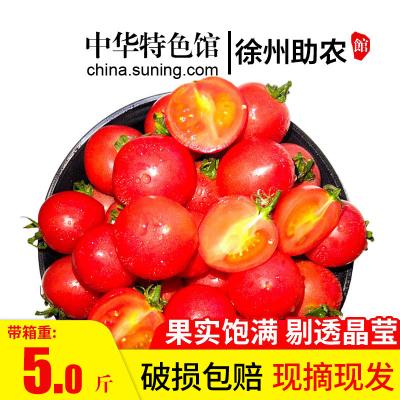 【中華特色】徐州助農館 新鮮千禧圣女果整箱5斤裝 小番茄西紅柿 新鮮蔬菜 蘇寧生鮮 華東