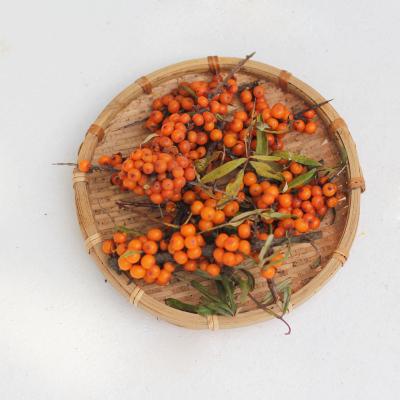 博多客吕梁沙棘果新鲜优质水果5斤可打沙棘汁
