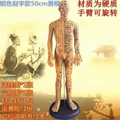 所走勢走向筋脈保健理療刮痧男性女性人體模型經絡穴位圖拔罐 銅色款【50cm男模】手臂可轉硬