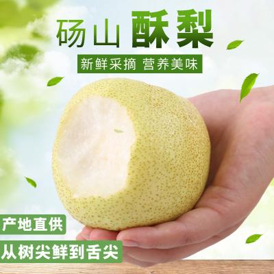 2019新鲜砀山酥梨2.5斤装 当季新鲜水果生鲜 砀山酥梨 现摘现发 五彩小淘