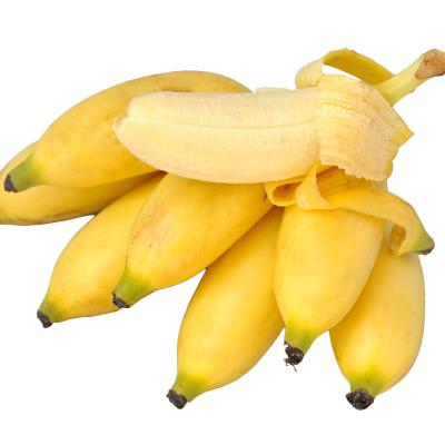 薯家上品 貴州小米蕉2.5斤 新鮮糯米蕉芭蕉現摘香蕉當季應季熱帶水果