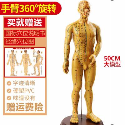 王太医针灸穴位经络人体模型小铜人成人男女模特超清晰高中医教学家用 男款可旋转