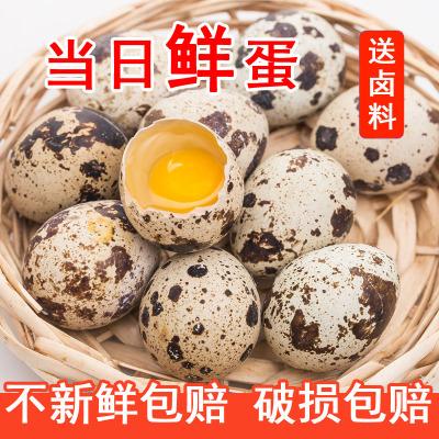 新鲜生鹌鹑蛋25枚 送卤料 正宗农家散养 宝宝辅食孕妇营养 非鸡蛋鹅蛋鸽子蛋鸭蛋变蛋