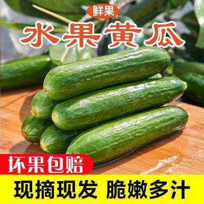 新鮮水果黃瓜2.5斤裝 新鮮綠黃瓜 新鮮蔬菜