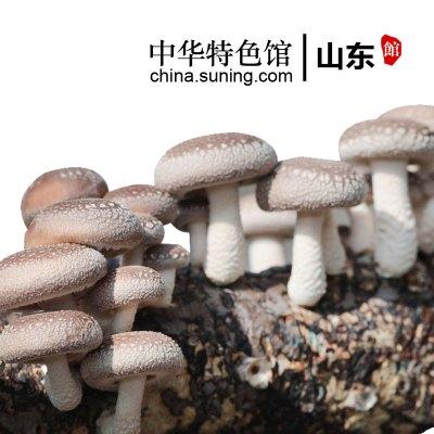 【中华特色】山东馆 鲁青扶贫 香菇菌包 食用菌菌种菌包菌种 蘑菇种子 多肉植物阳台种植蘑菇菌包