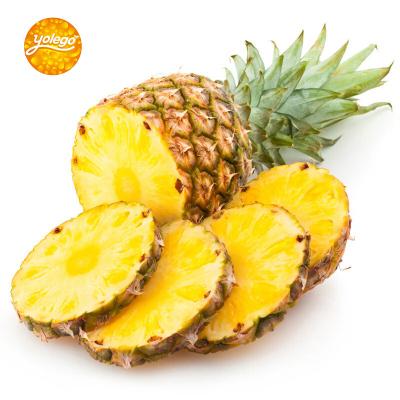 (两件起售)悠乐果 云南香水菠萝2.5斤非凤梨新鲜水果
