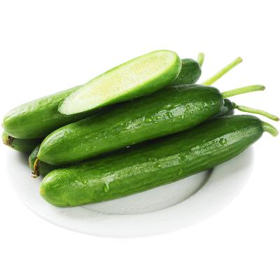 【一份2.5斤 雙數發貨】水果黃瓜荷蘭瓜新鮮生吃2.5斤應季蔬菜孕婦水果青瓜山東迷你小黃瓜