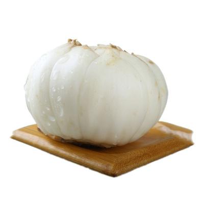 博多客 甘肃兰州新鲜百合 食用甜百合 生鲜 500g特大号4颗