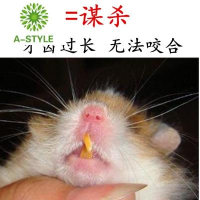 倉鼠磨牙石 兔子磨牙棒 荷蘭豬龍貓金絲熊松鼠用品兔兔零食蘋果枝