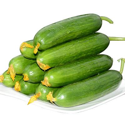 新鲜水果黄瓜2.5斤装 新鲜绿黄瓜 新鲜蔬菜