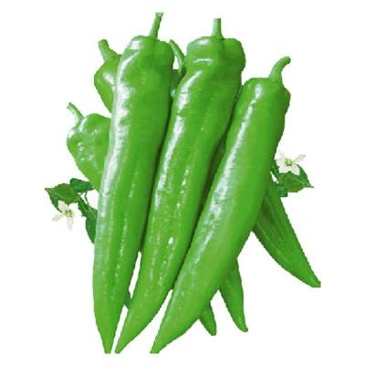 津沽园艺 蔬菜种子 辣椒种子 牛角椒种子 抗病 高产 椒大 非常容易 春季四季植物 1包